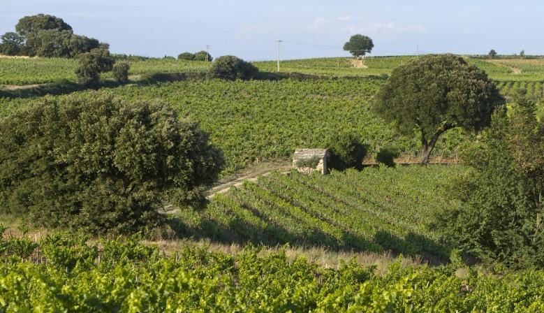 Le cabanon et le vignoble du DOMAINE DE BEAURENARD (lieu-dit Cabrière)